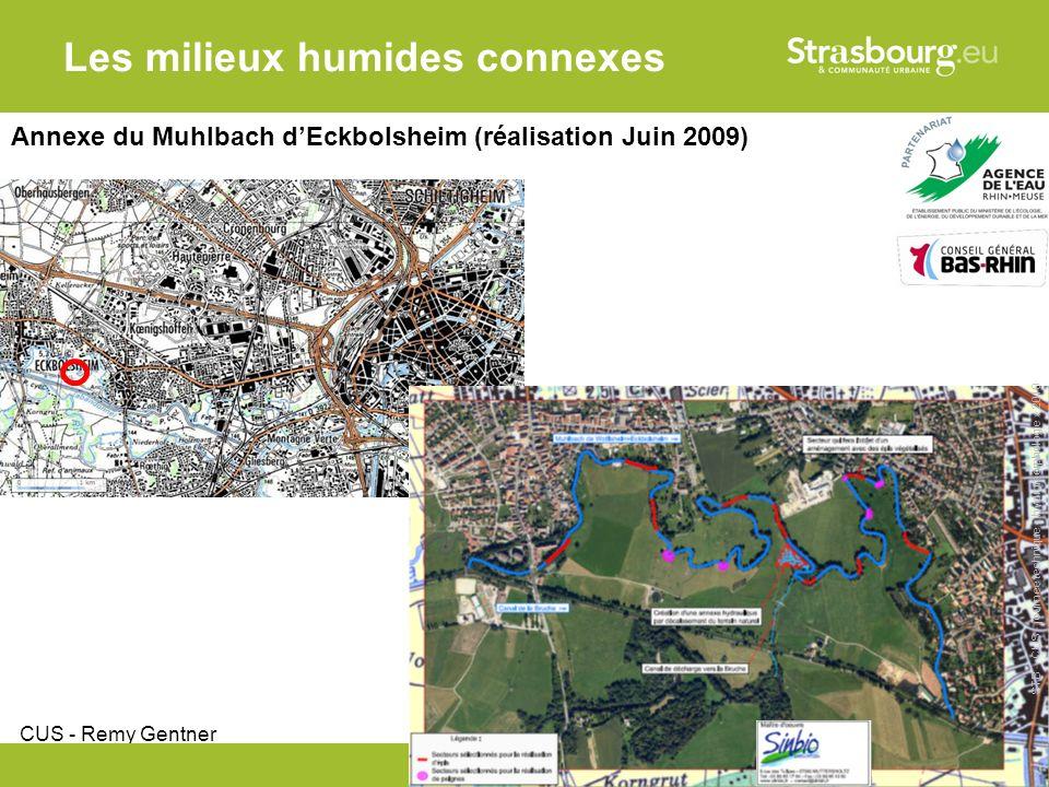 CUS - Remy Gentner 16 Les milieux humides connexes Annexe du Muhlbach dEckbolsheim (réalisation Juin 2009) STB – CUS - journée technique « hydromorphologie » 2010