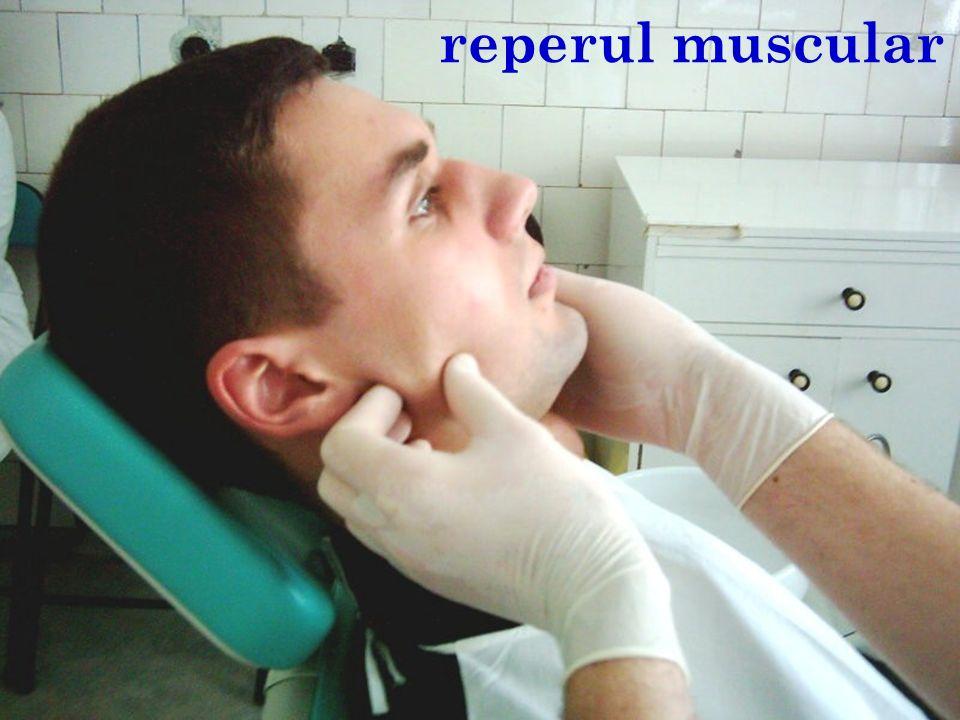reperul muscular