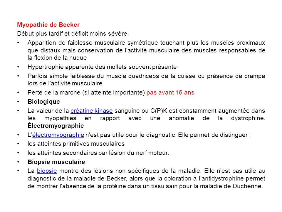 Myopathie de Becker Début plus tardif et déficit moins sévère. Apparition de faiblesse musculaire symétrique touchant plus les muscles proximaux que d