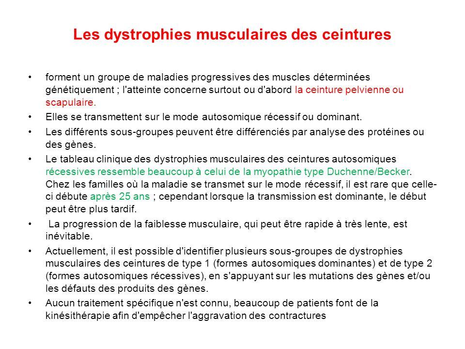 Les dystrophies musculaires des ceintures forment un groupe de maladies progressives des muscles déterminées génétiquement ; l'atteinte concerne surto