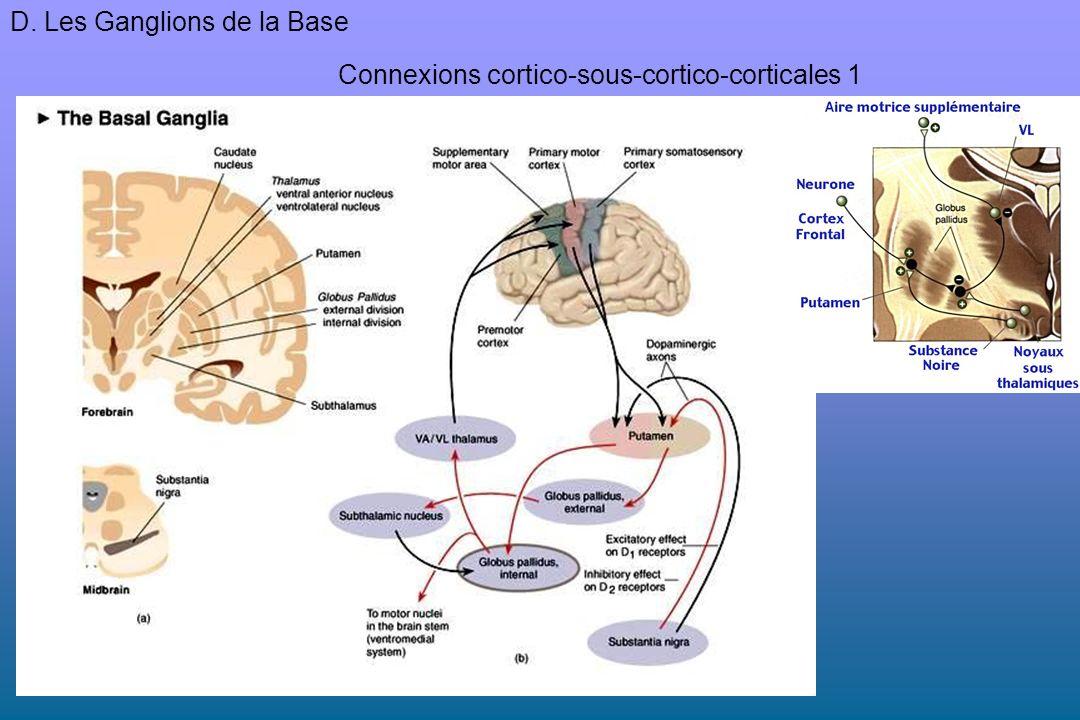 D. Les Ganglions de la Base Connexions cortico-sous-cortico-corticales 1