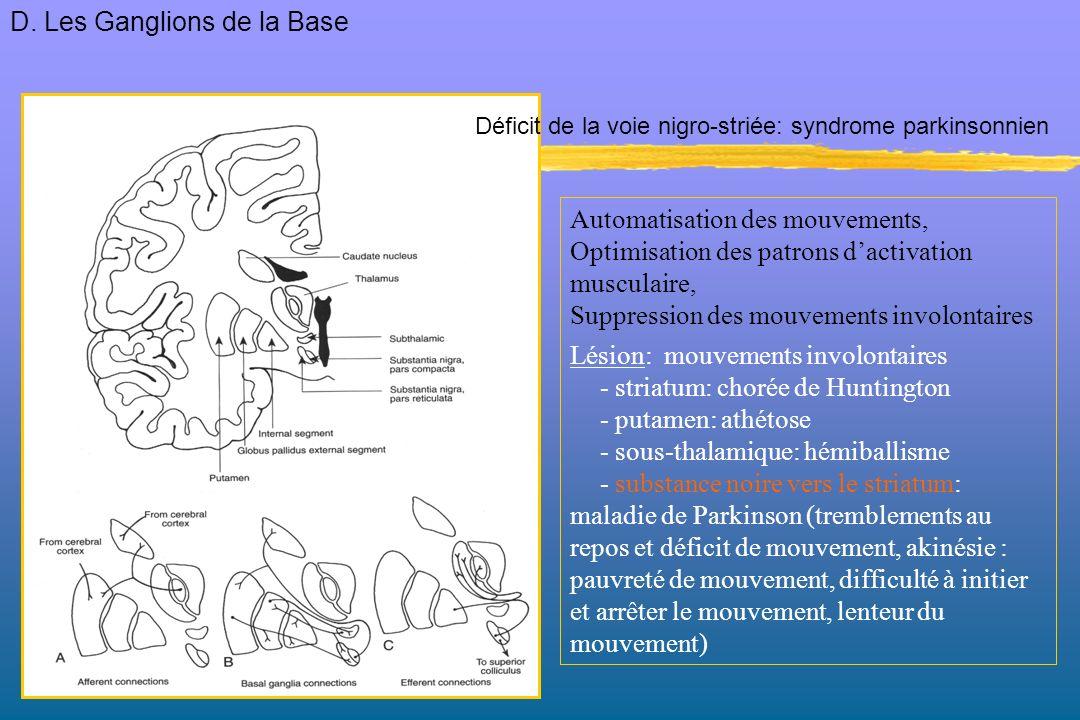 Automatisation des mouvements, Optimisation des patrons dactivation musculaire, Suppression des mouvements involontaires Lésion: mouvements involontai