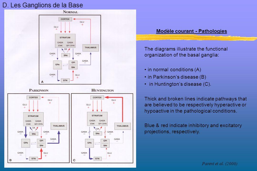 Élaboration chronologique Commande motrice du mouvement: -élaboration = aires corticales de linitiation du mouvement (AMS, aire pariétale des praxies et aires associatives).
