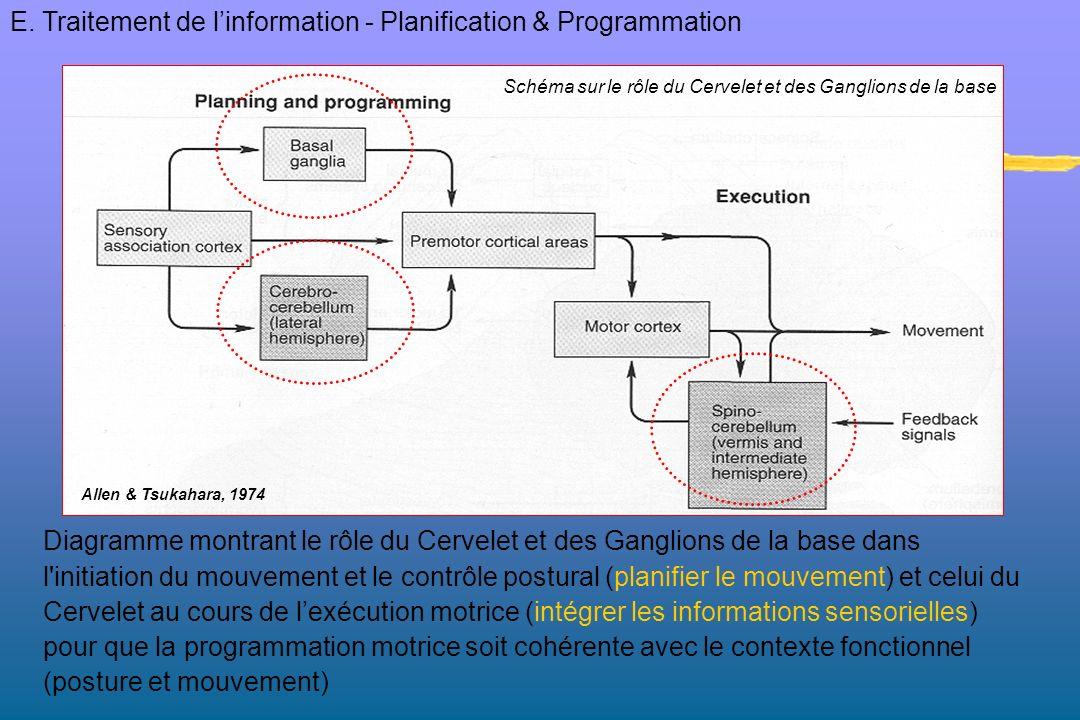 Diagramme montrant le rôle du Cervelet et des Ganglions de la base dans l'initiation du mouvement et le contrôle postural (planifier le mouvement) et