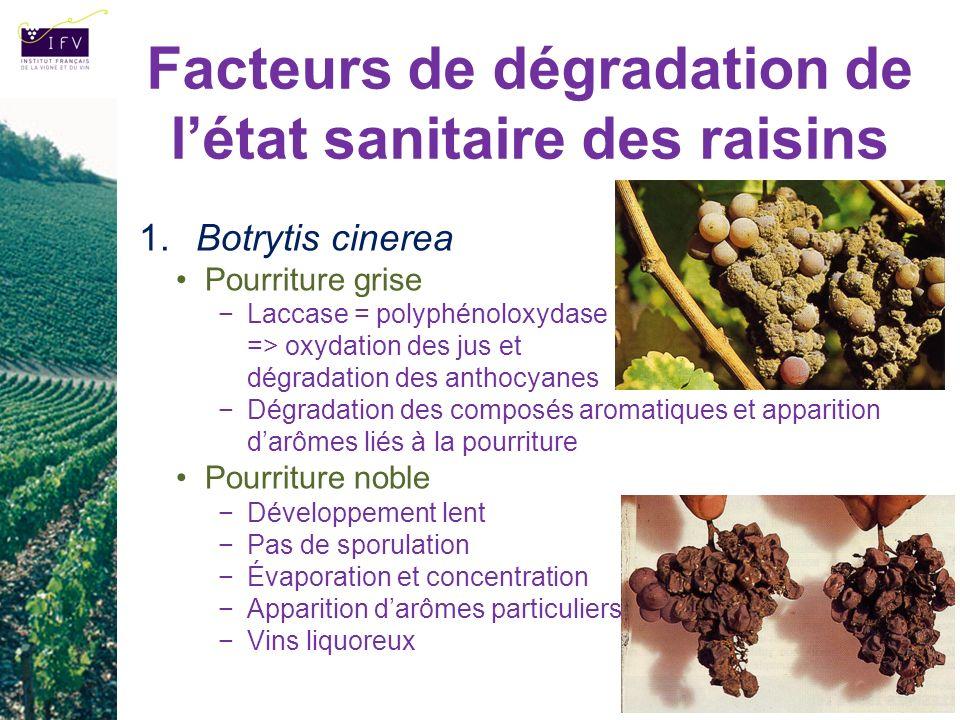 Facteurs de dégradation de létat sanitaire des raisins 1. Botrytis cinerea Pourriture grise Laccase = polyphénoloxydase => oxydation des jus et dégrad