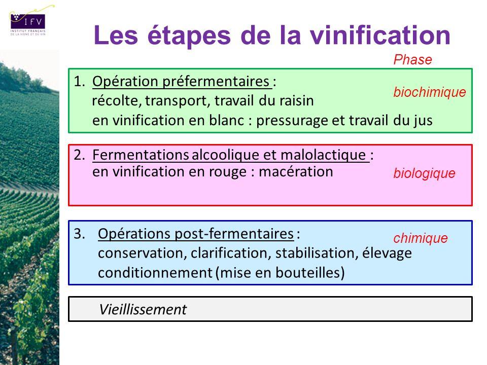 Les étapes de la vinification 2.Fermentations alcoolique et malolactique : en vinification en rouge : macération 3.Opérations post-fermentaires : cons