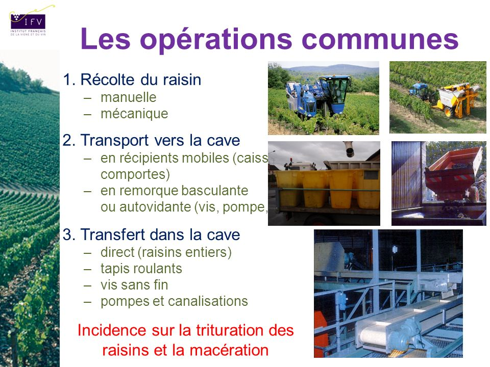 1. Récolte du raisin –manuelle –mécanique Les opérations communes 2. Transport vers la cave –en récipients mobiles (caisses, bacs, comportes) –en remo