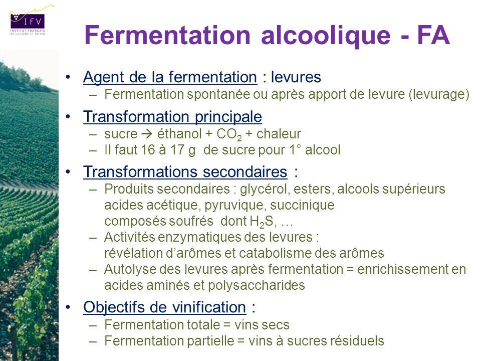 Fermentation alcoolique - FA Agent de la fermentation : levures –Fermentation spontanée ou après apport de levure (levurage) Transformation principale