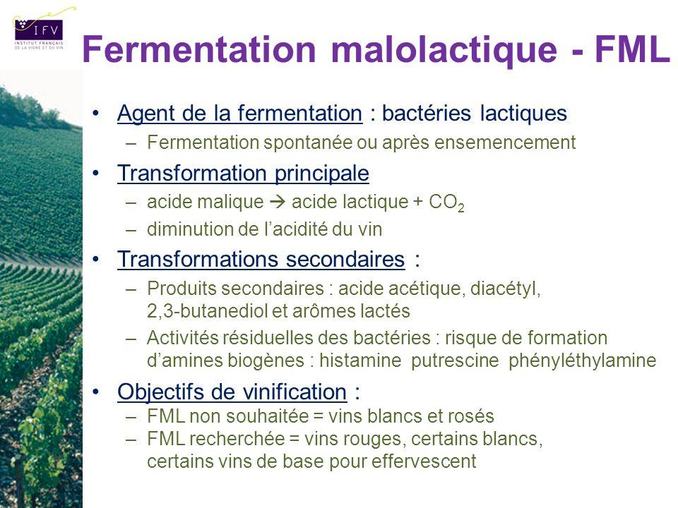 Fermentation malolactique - FML Agent de la fermentation : bactéries lactiques –Fermentation spontanée ou après ensemencement Transformation principal
