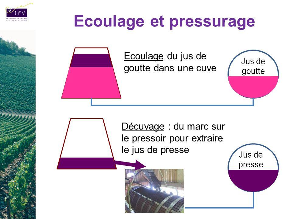 Ecoulage et pressurage Ecoulage du jus de goutte dans une cuve Décuvage : du marc sur le pressoir pour extraire le jus de presse Jus de goutte Jus de