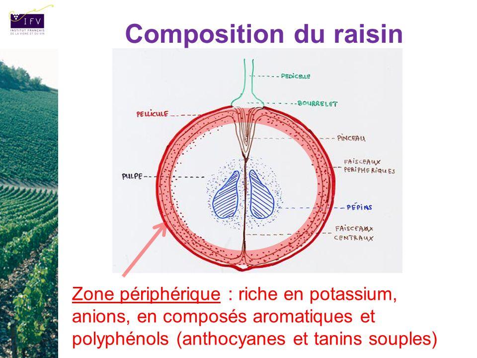 Composition du raisin Zone périphérique : riche en potassium, anions, en composés aromatiques et polyphénols (anthocyanes et tanins souples)