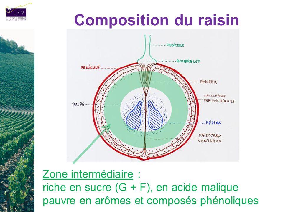 Composition du raisin Zone intermédiaire : riche en sucre (G + F), en acide malique pauvre en arômes et composés phénoliques