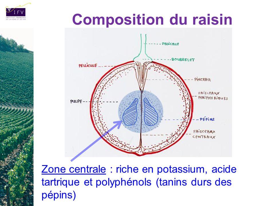 Composition du raisin Zone centrale : riche en potassium, acide tartrique et polyphénols (tanins durs des pépins)