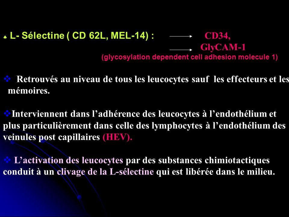 L- Sélectine ( CD 62L, MEL-14) : CD34, GlyCAM-1 (glycosylation dependent cell adhesion molecule 1) Retrouvés au niveau de tous les leucocytes sauf les effecteurs et les mémoires.
