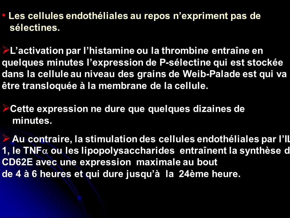 Les cellules endothéliales au repos nexpriment pas de sélectines. Lactivation par lhistamine ou la thrombine entraîne en quelques minutes lexpression