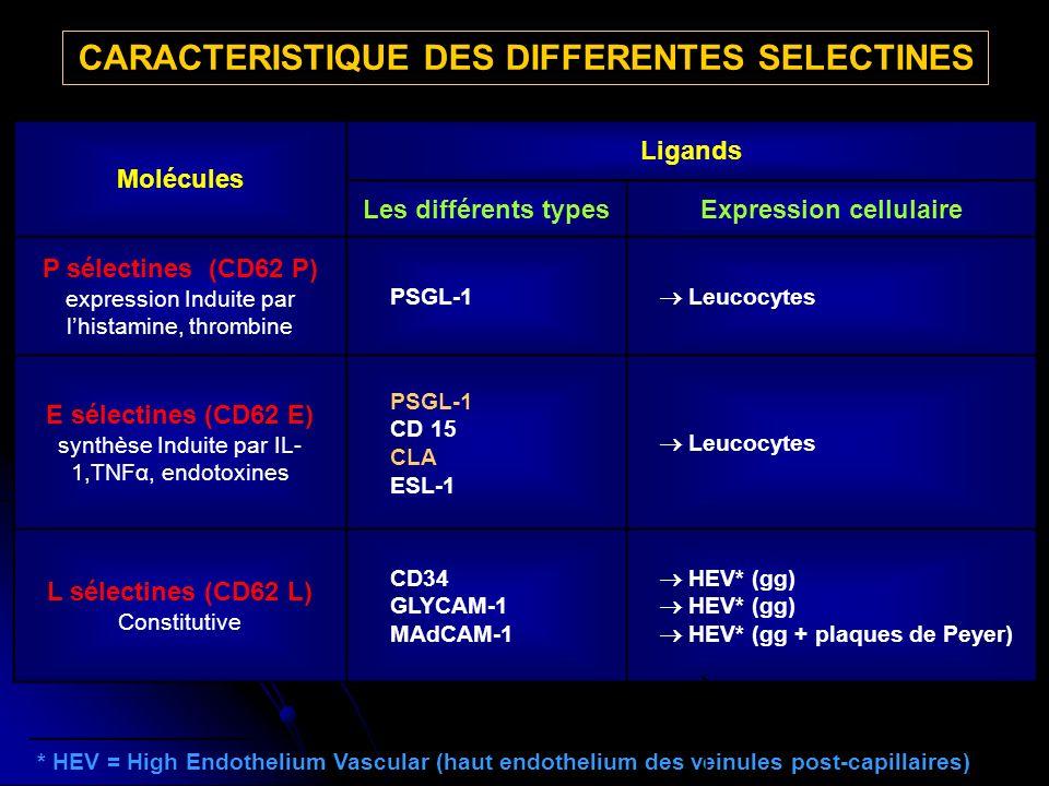 * HEV = High Endothelium Vascular (haut endothelium des veinules post-capillaires) CARACTERISTIQUE DES DIFFERENTES SELECTINES Molécules Ligands Les différents typesExpression cellulaire P sélectines (CD62 P) expression Induite par lhistamine, thrombine PSGL-1 Leucocytes E sélectines (CD62 E) synthèse Induite par IL- 1,TNFα, endotoxines PSGL-1 CD 15 CLA ESL-1 Leucocytes L sélectines (CD62 L) Constitutive CD34 GLYCAM-1 MAdCAM-1 HEV* (gg) HEV* (gg + plaques de Peyer)