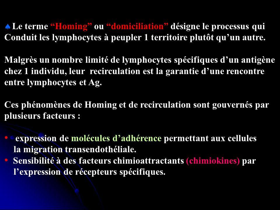 Le terme Homing ou domiciliation désigne le processus qui Conduit les lymphocytes à peupler 1 territoire plutôt quun autre.