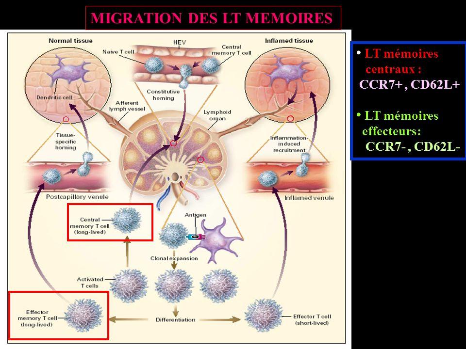 MIGRATION DES LT MEMOIRES LT mémoires centraux : CCR7+, CD62L+ LT mémoires effecteurs: CCR7-, CD62L-