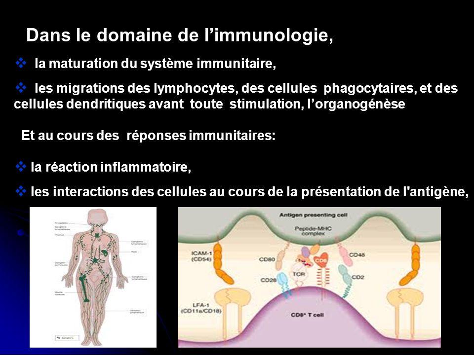 Dans le domaine de limmunologie, la maturation du système immunitaire, les migrations des lymphocytes, des cellules phagocytaires, et des cellules dendritiques avant toute stimulation, lorganogénèse Et au cours des réponses immunitaires: la réaction inflammatoire, les interactions des cellules au cours de la présentation de l antigène,