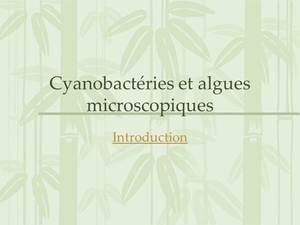 Cyanobactéries et algues microscopiques Introduction