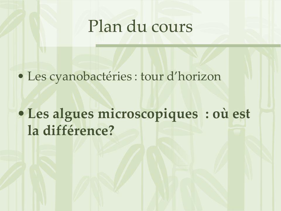 Plan du cours Les cyanobactéries : tour dhorizon Les algues microscopiques : où est la différence?