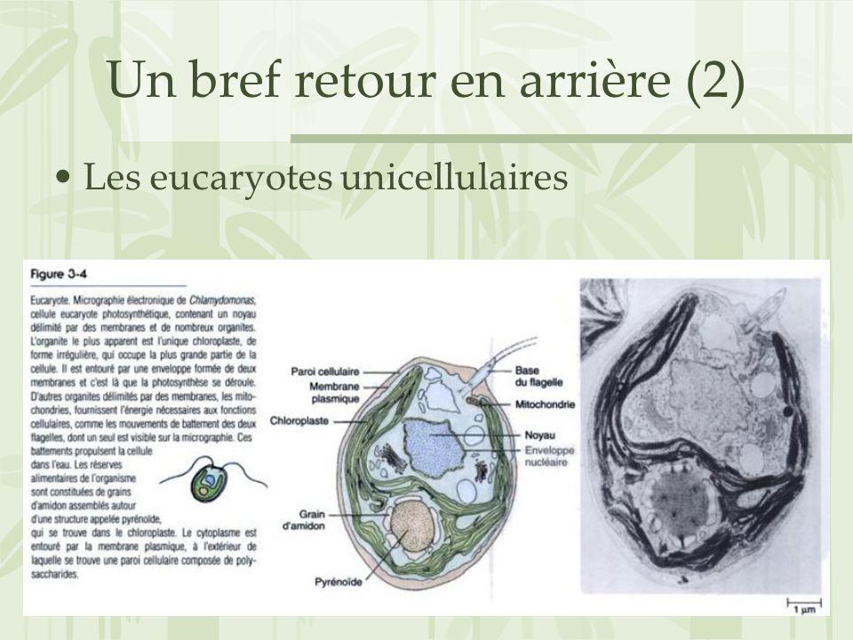 Un bref retour en arrière (2) Les eucaryotes unicellulaires