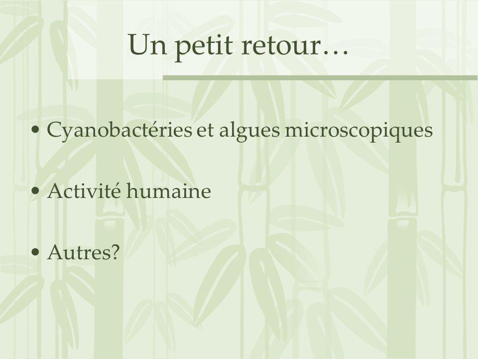 Un petit retour… Cyanobactéries et algues microscopiques Activité humaine Autres?