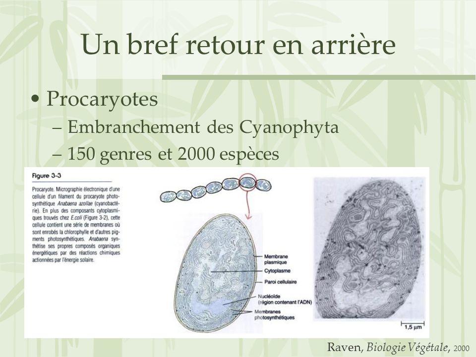 Un bref retour en arrière Procaryotes –Embranchement des Cyanophyta –150 genres et 2000 espèces Raven, Biologie Végétale, 2000