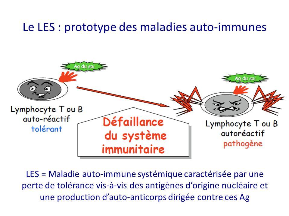 Le LES : prototype des maladies auto-immunes LES = Maladie auto-immune systémique caractérisée par une perte de tolérance vis-à-vis des antigènes dorigine nucléaire et une production dauto-anticorps dirigée contre ces Ag