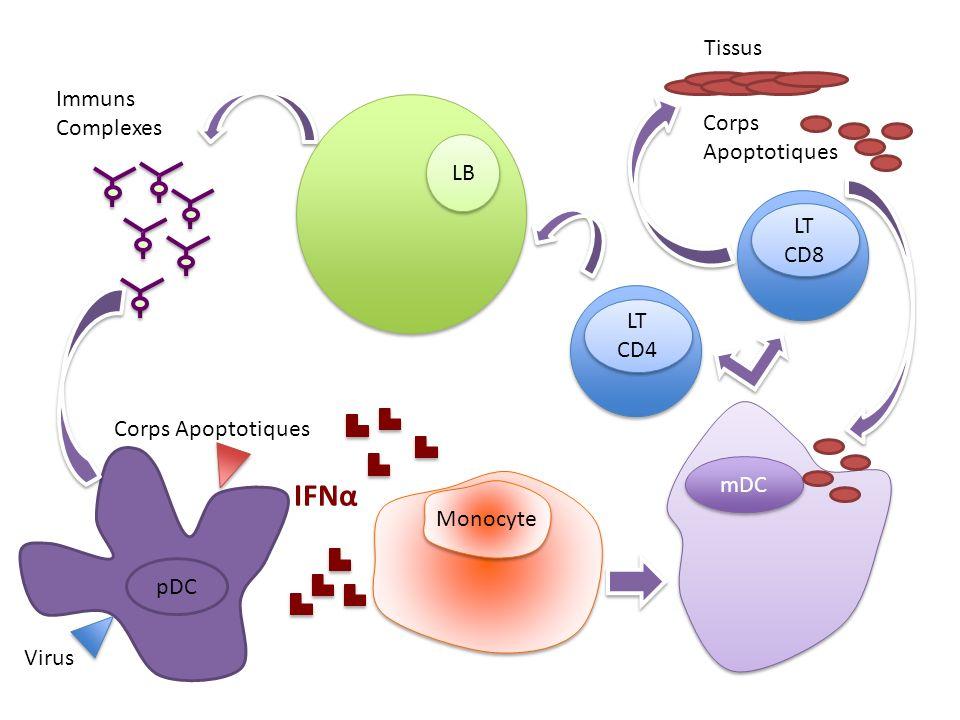 LT CD8 mDC LB pDC IFNα Monocyte Tissus Corps Apoptotiques LT CD4 Immuns Complexes Virus Corps Apoptotiques