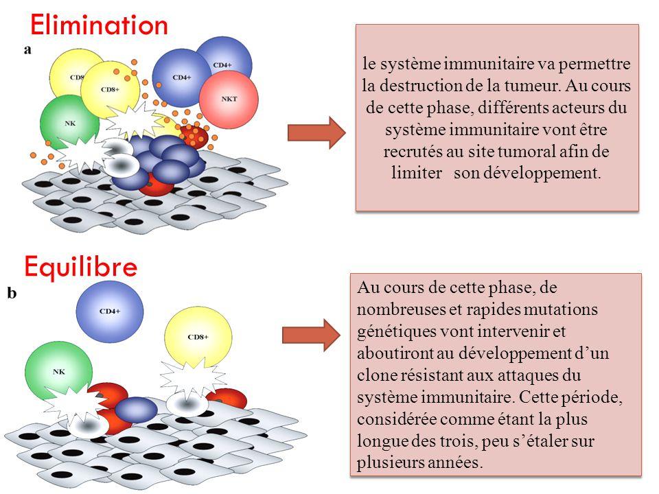le système immunitaire va permettre la destruction de la tumeur. Au cours de cette phase, différents acteurs du système immunitaire vont être recrutés