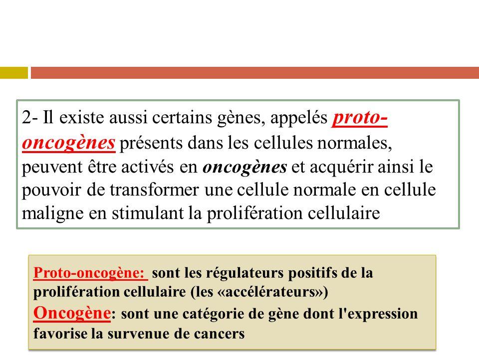 2- Il existe aussi certains gènes, appelés proto- oncogènes présents dans les cellules normales, peuvent être activés en oncogènes et acquérir ainsi l