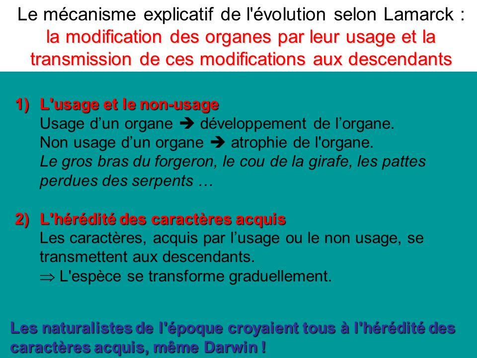 1)L usage et le non-usage Usage dun organe développement de lorgane.