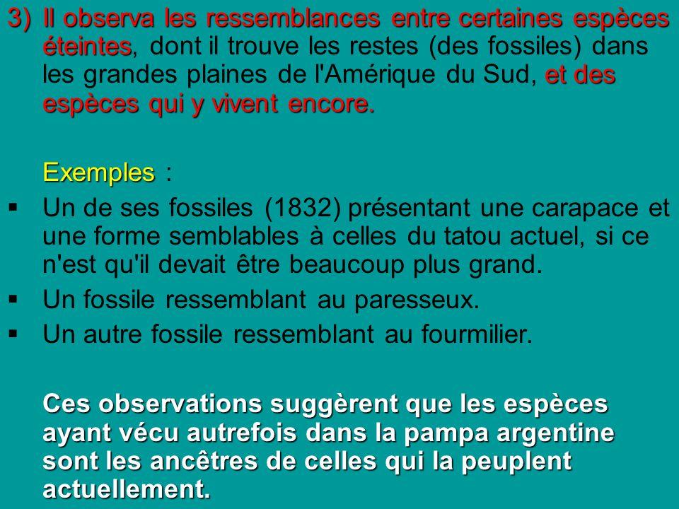 3)Il observa les ressemblances entre certaines espèces éteintes et des espèces qui y vivent encore.