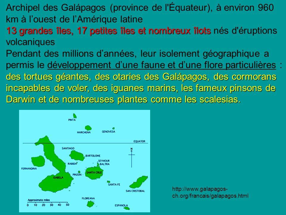 Archipel des Galápagos (province de l Équateur), à environ 960 km à louest de lAmérique latine 13 grandes îles, 17 petites îles et nombreux îlots 13 grandes îles, 17 petites îles et nombreux îlots nés d éruptions volcaniques des tortues géantes, des otaries des Galápagos, des cormorans incapables de voler, des iguanes marins, les fameux pinsons de Darwin et de nombreuses plantes comme les scalesias.