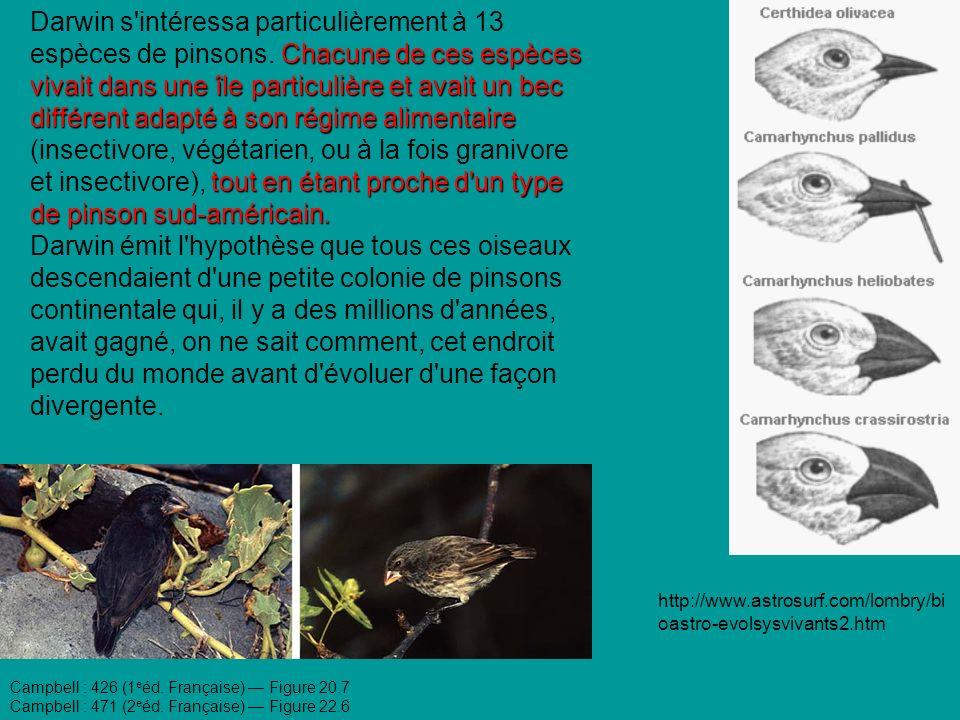 Chacune de ces espèces vivait dans une île particulière et avait un bec différent adapté à son régime alimentaire tout en étant proche d un type de pinson sud-américain.