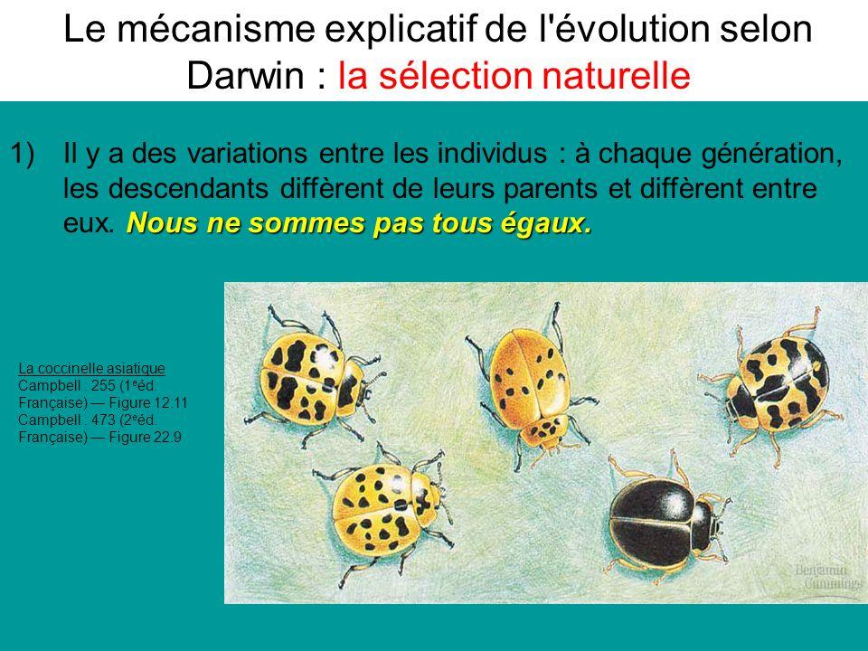 Le mécanisme explicatif de l évolution selon Darwin : la sélection naturelle La coccinelle asiatique Campbell : 255 (1 e éd.