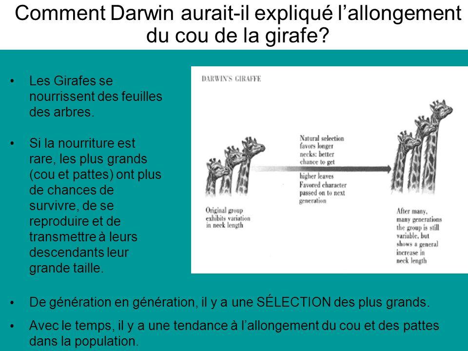 Comment Darwin aurait-il expliqué lallongement du cou de la girafe.