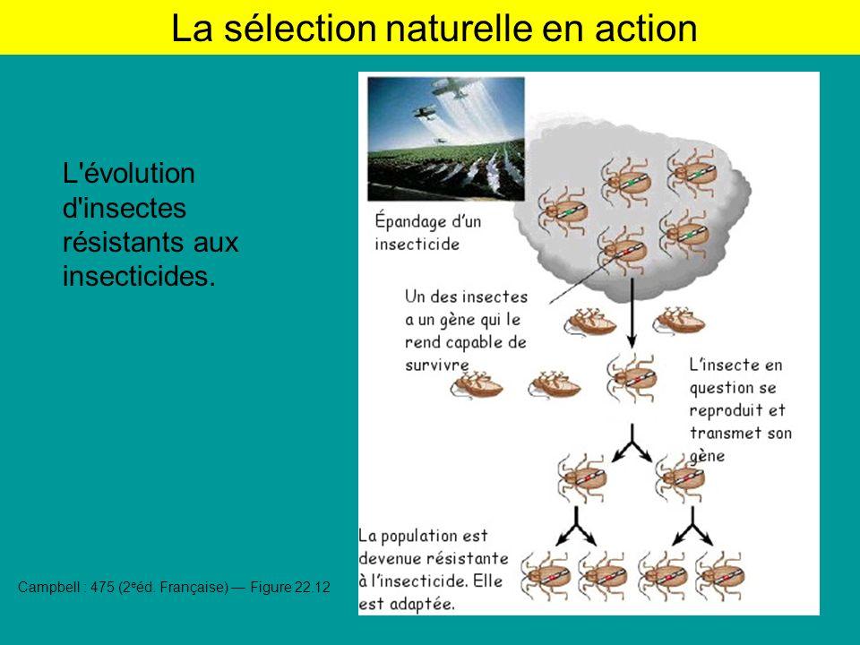 L évolution d insectes résistants aux insecticides.