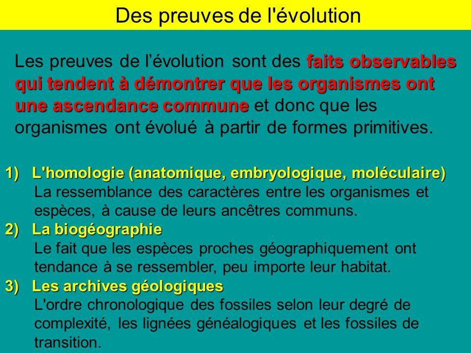 1) L homologie (anatomique, embryologique, moléculaire) La ressemblance des caractères entre les organismes et espèces, à cause de leurs ancêtres communs.