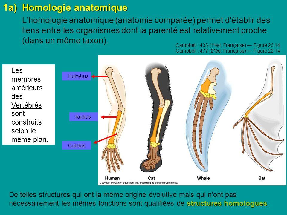 1a)Homologie anatomique L homologie anatomique (anatomie comparée) permet d établir des liens entre les organismes dont la parenté est relativement proche (dans un même taxon).