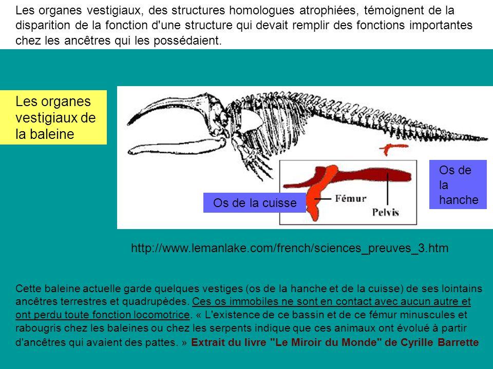 Les organes vestigiaux, des structures homologues atrophiées, témoignent de la disparition de la fonction d une structure qui devait remplir des fonctions importantes chez les ancêtres qui les possédaient.