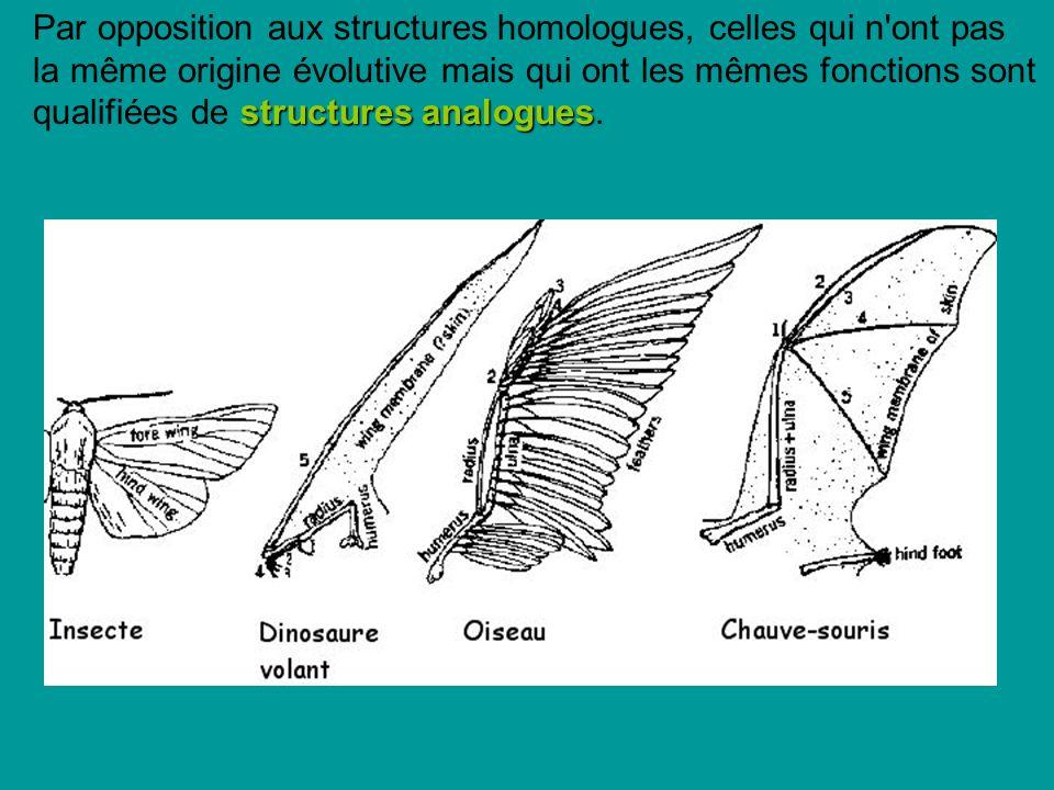 structures analogues Par opposition aux structures homologues, celles qui n ont pas la même origine évolutive mais qui ont les mêmes fonctions sont qualifiées de structures analogues.