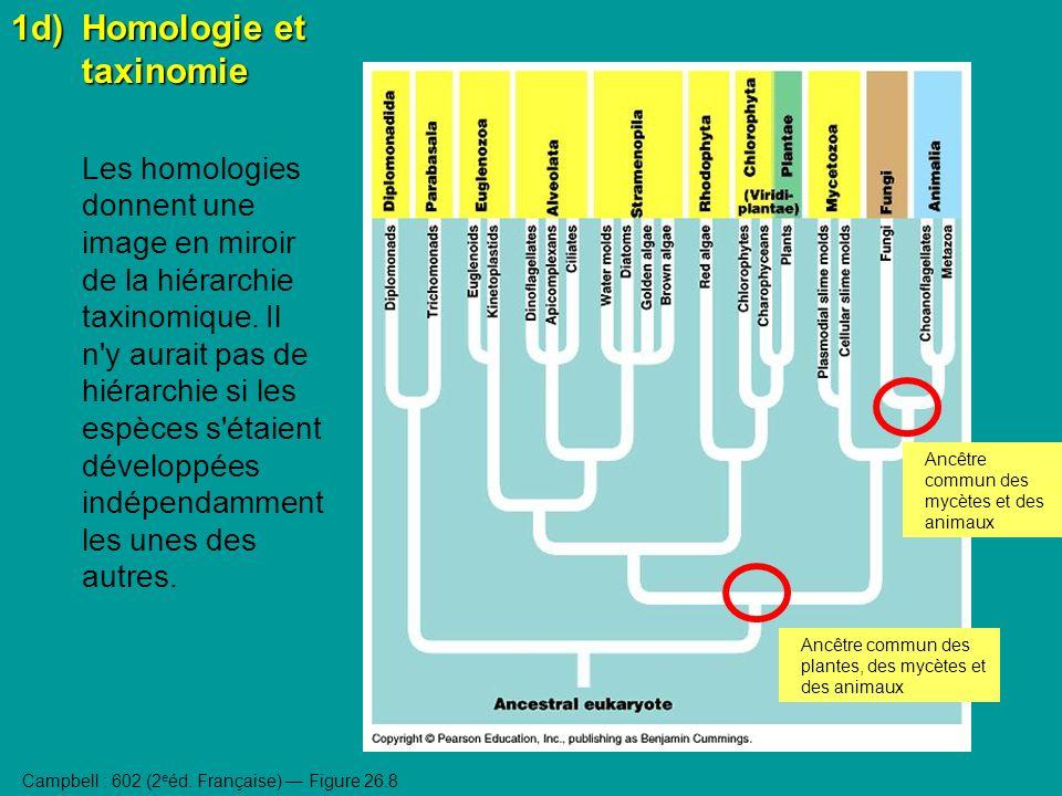 1d)Homologie et taxinomie Les homologies donnent une image en miroir de la hiérarchie taxinomique.