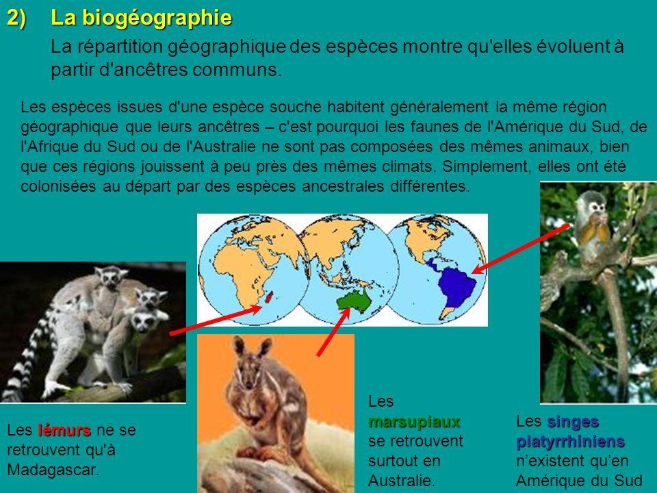 2)La biogéographie La répartition géographique des espèces montre qu elles évoluent à partir d ancêtres communs.