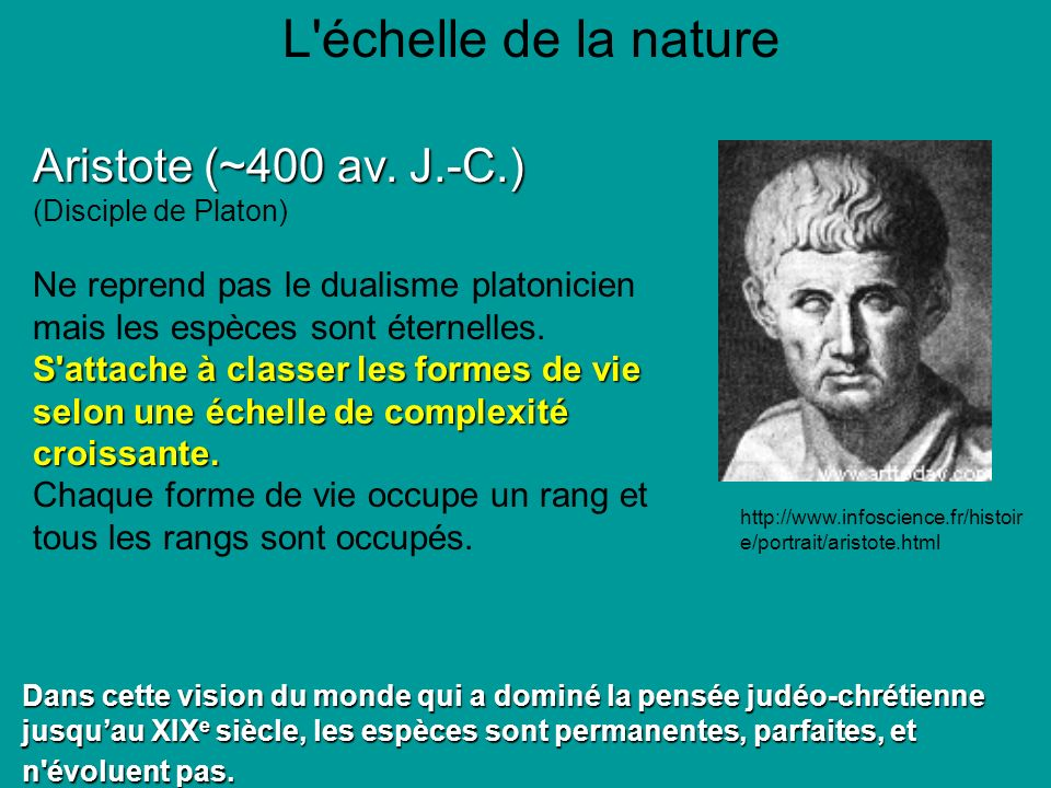 L échelle de la nature Aristote (~400 av.