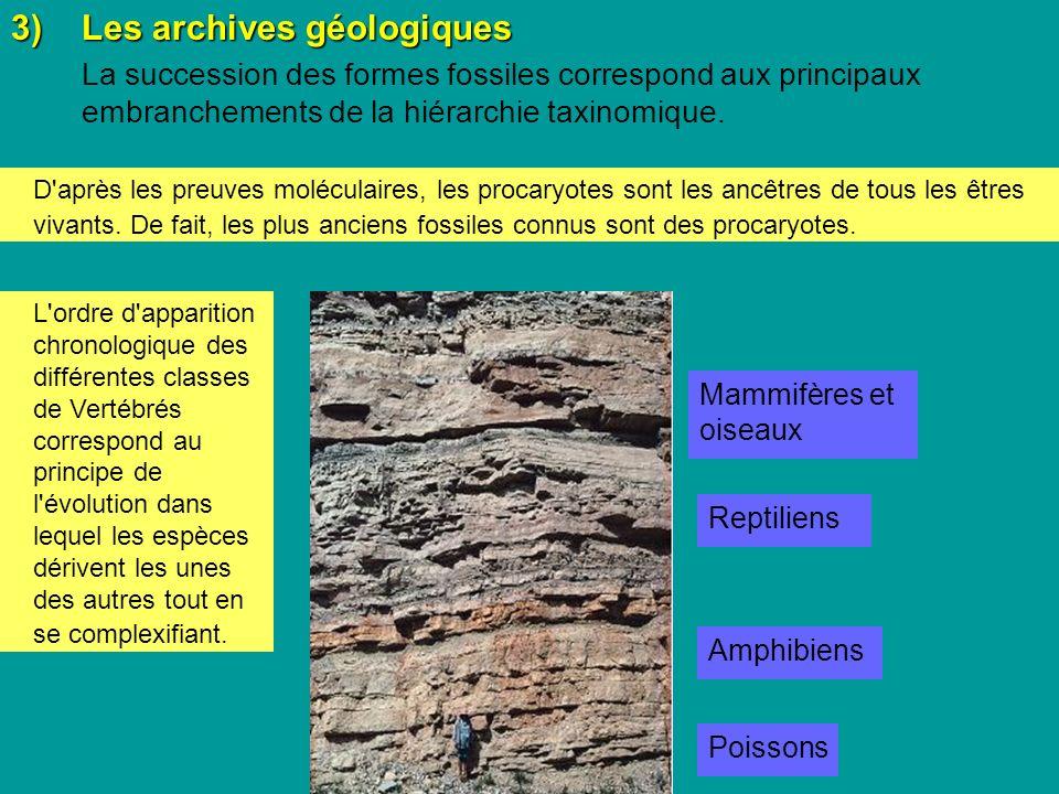 3)Les archives géologiques La succession des formes fossiles correspond aux principaux embranchements de la hiérarchie taxinomique.