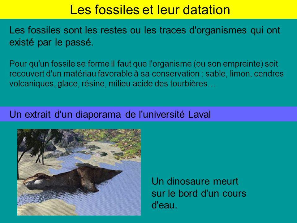 Les fossiles et leur datation Les fossiles sont les restes ou les traces d organismes qui ont existé par le passé.
