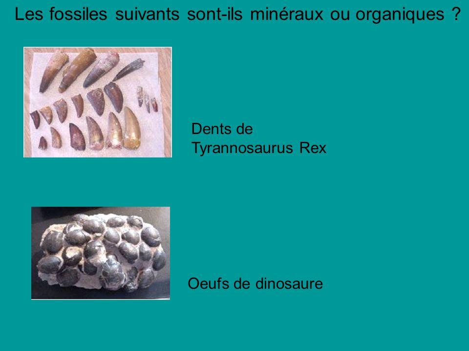 Les fossiles suivants sont-ils minéraux ou organiques .