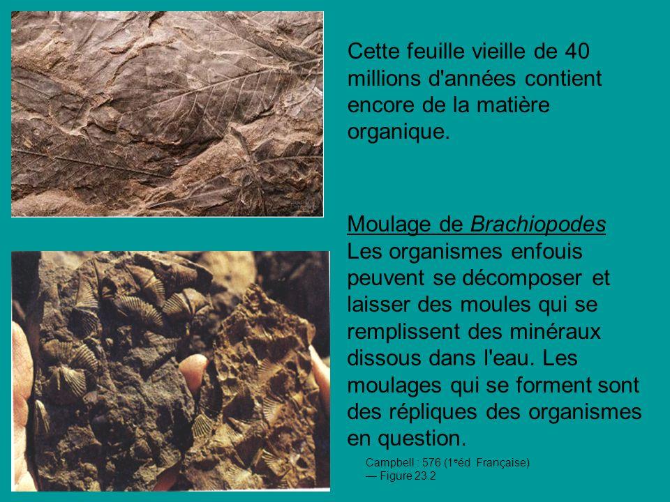 Cette feuille vieille de 40 millions d années contient encore de la matière organique.